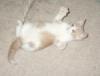 Flabellaria sp. - Per quei 4 gatti che amano i vegetali - ultimo messaggio di dario